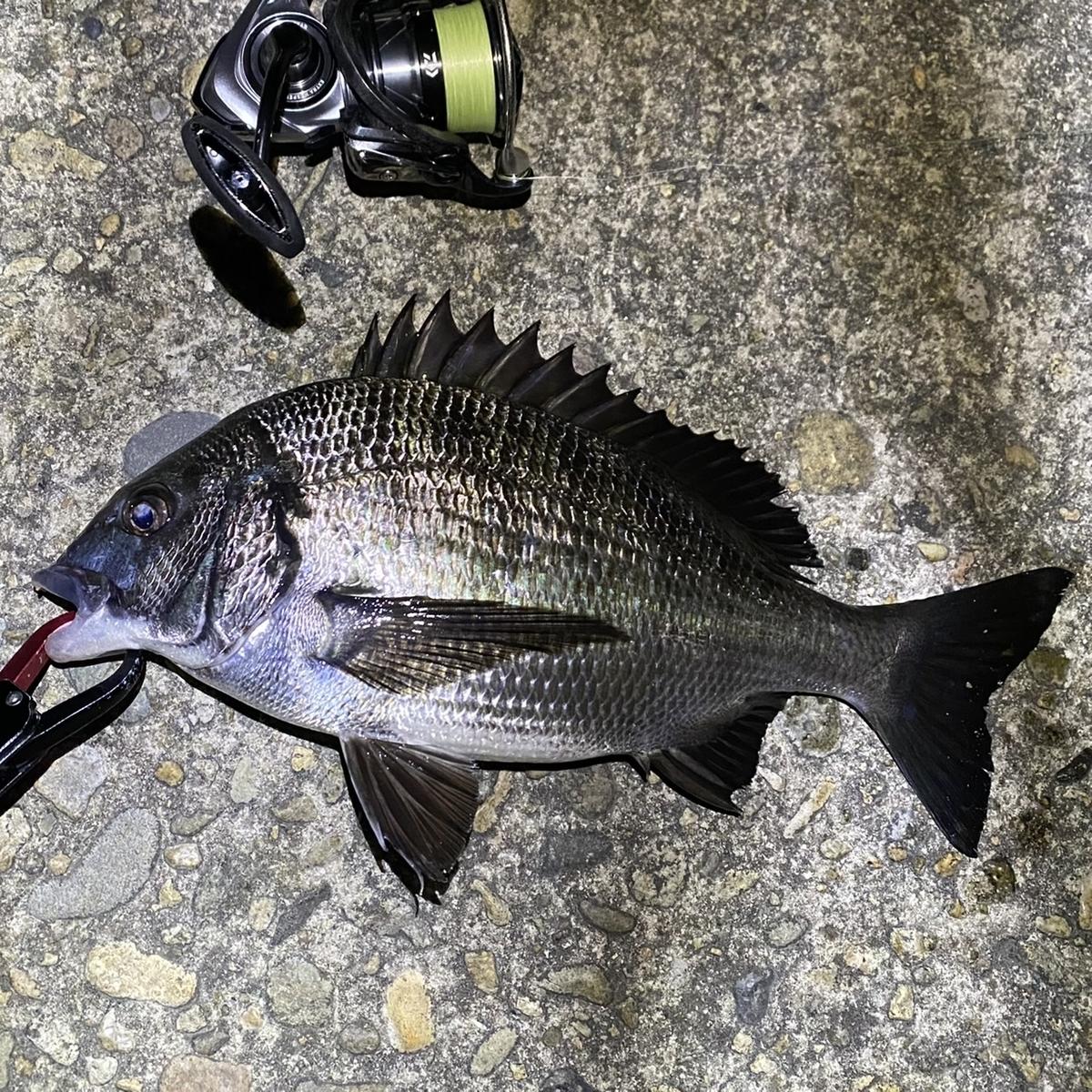 f:id:yu-kin-fishing:20210404140319j:plain