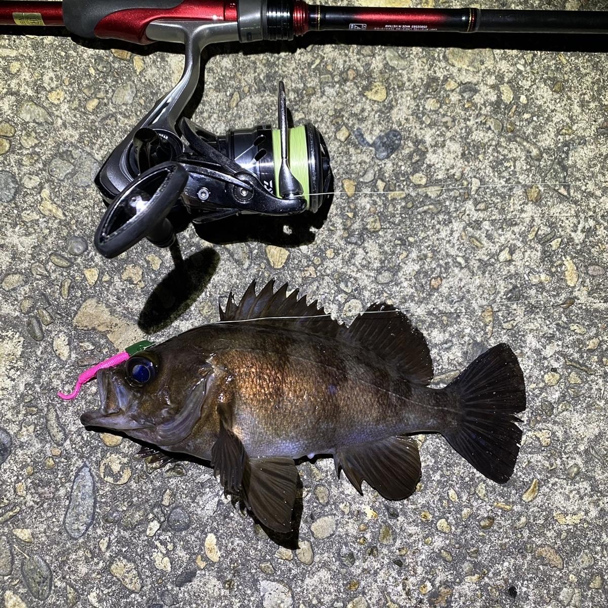 f:id:yu-kin-fishing:20210404140425j:plain