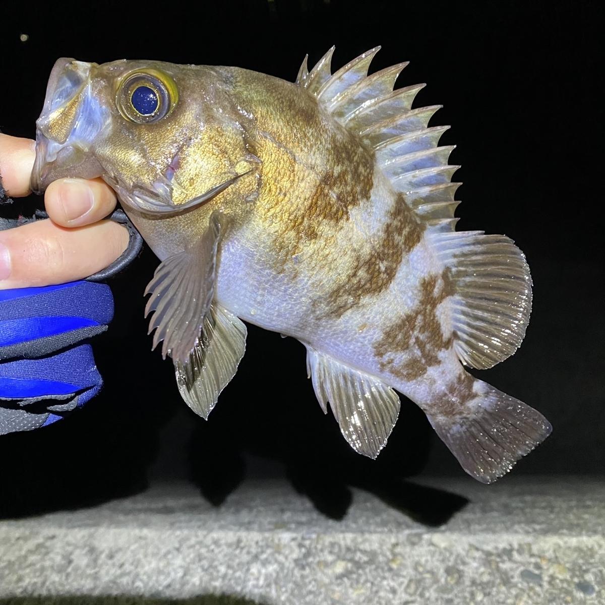 f:id:yu-kin-fishing:20210404140515j:plain