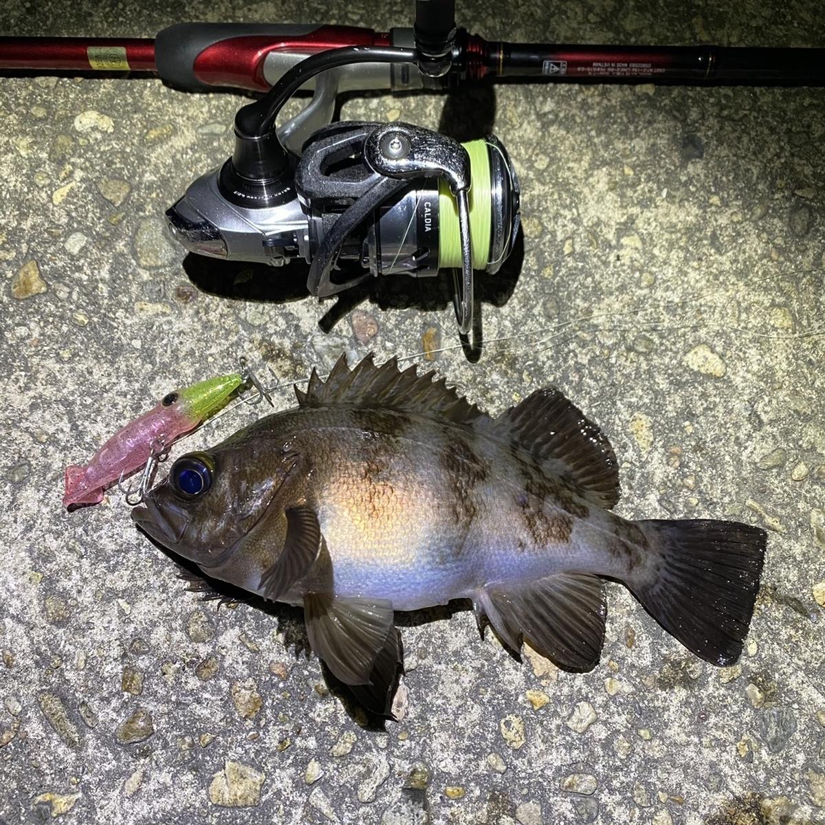 f:id:yu-kin-fishing:20210404140916j:plain