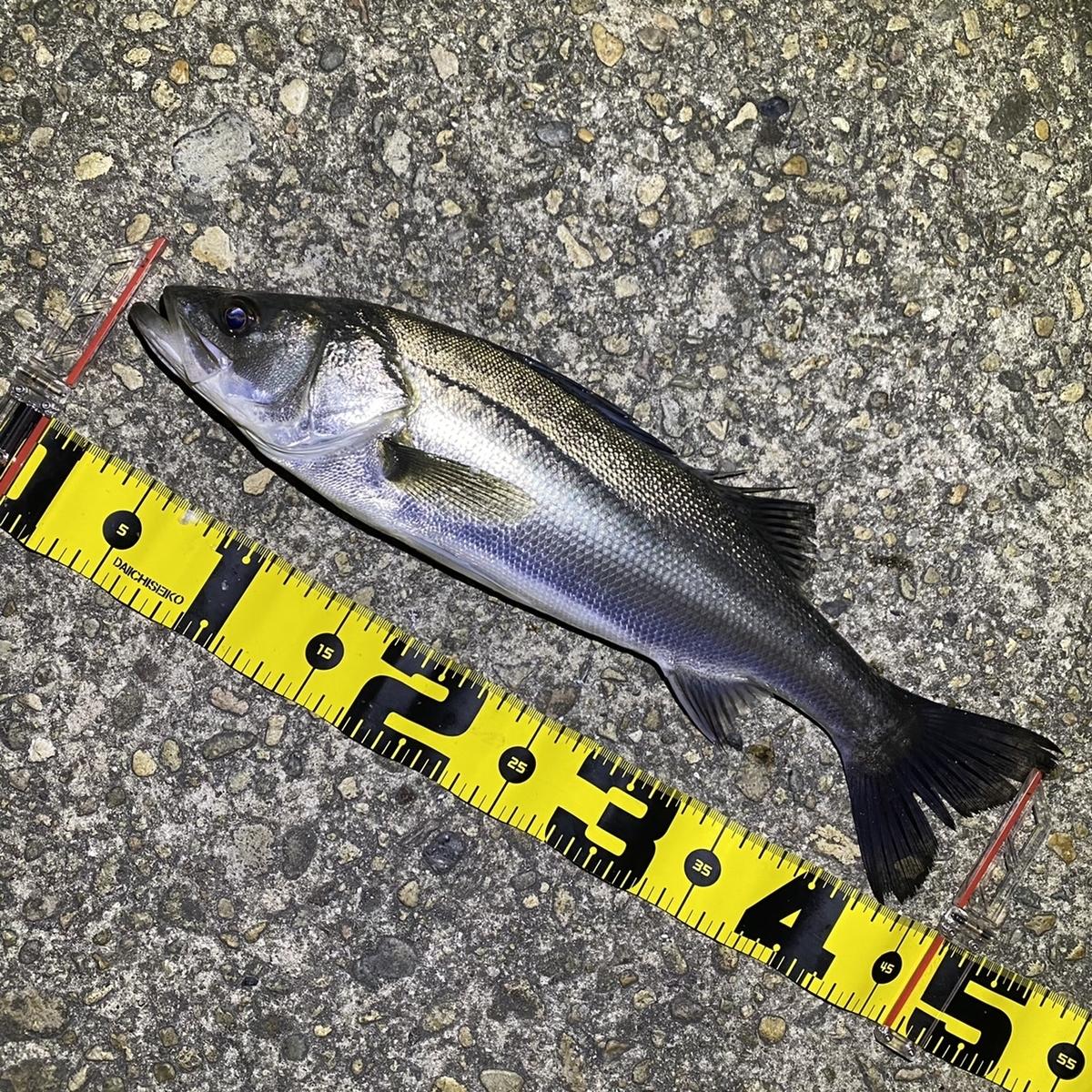 f:id:yu-kin-fishing:20210408202744j:plain