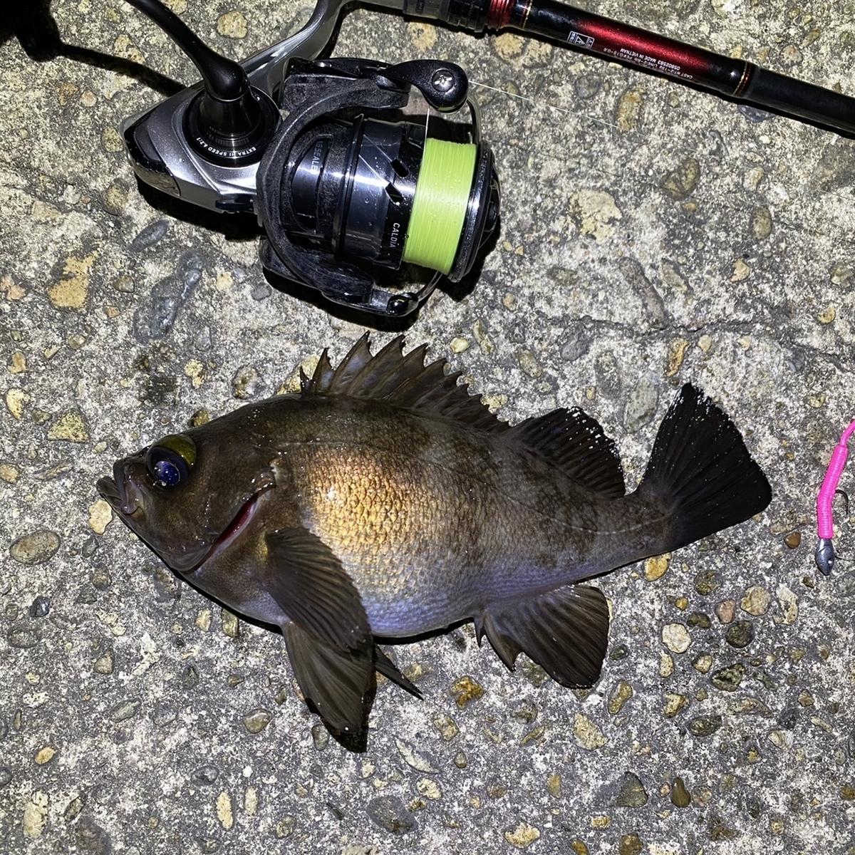 f:id:yu-kin-fishing:20210408202814j:plain