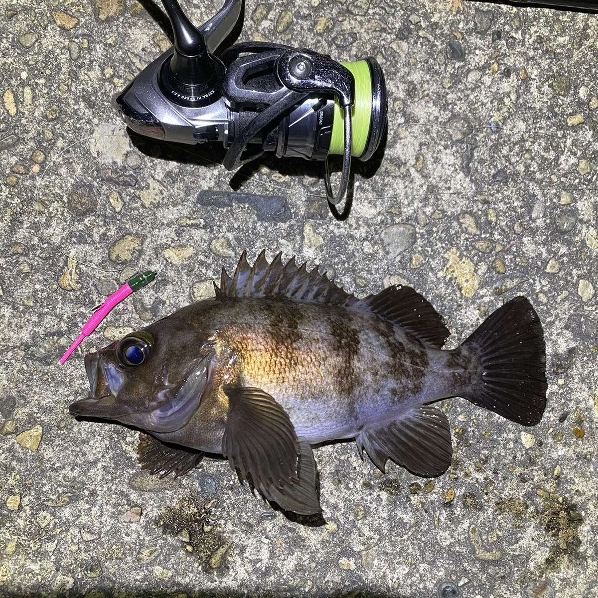 f:id:yu-kin-fishing:20210408202833j:plain