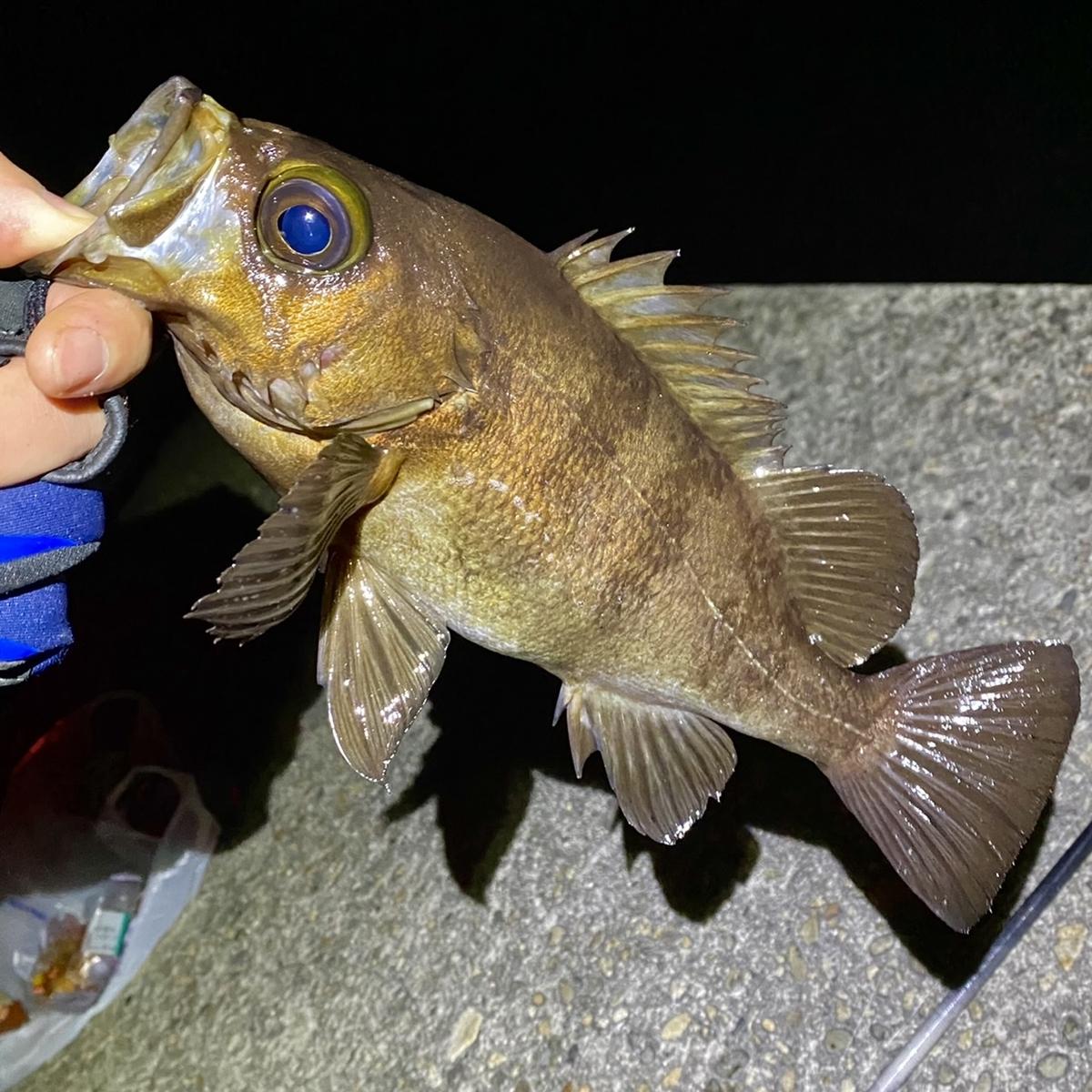 f:id:yu-kin-fishing:20210408202950j:plain
