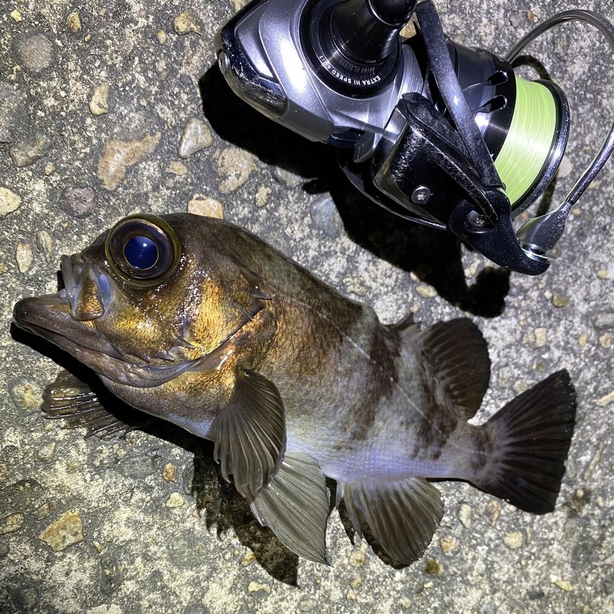 f:id:yu-kin-fishing:20210408202959j:plain