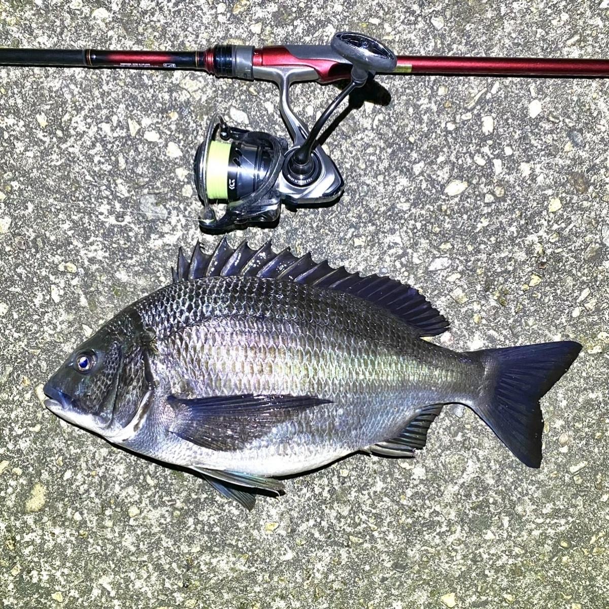 f:id:yu-kin-fishing:20210410173843j:plain