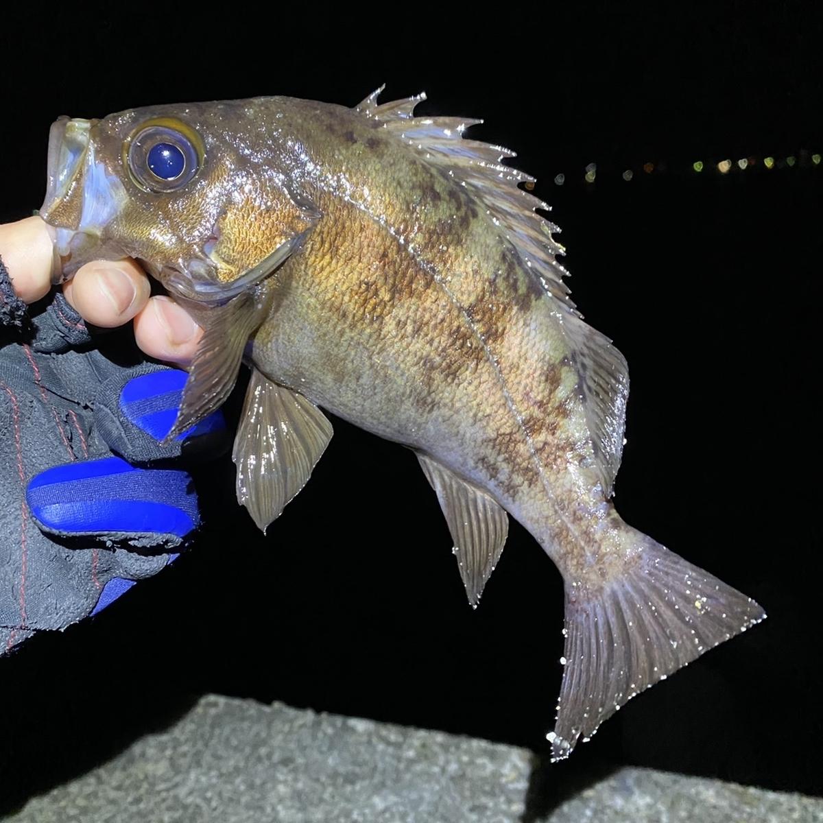 f:id:yu-kin-fishing:20210417123741j:plain