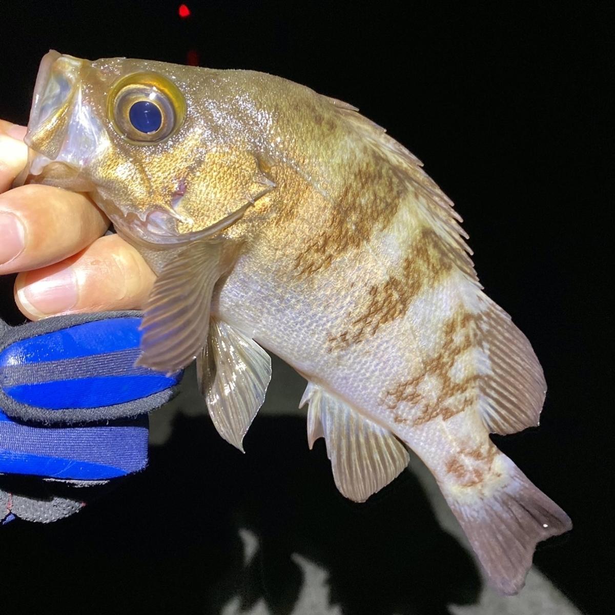 f:id:yu-kin-fishing:20210418180936j:plain