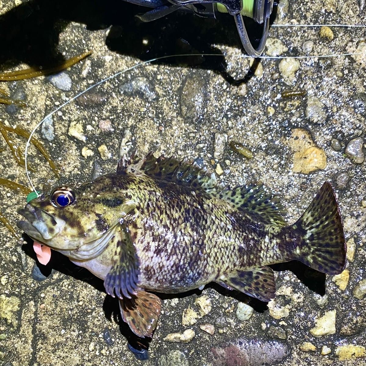 f:id:yu-kin-fishing:20210418180948j:plain
