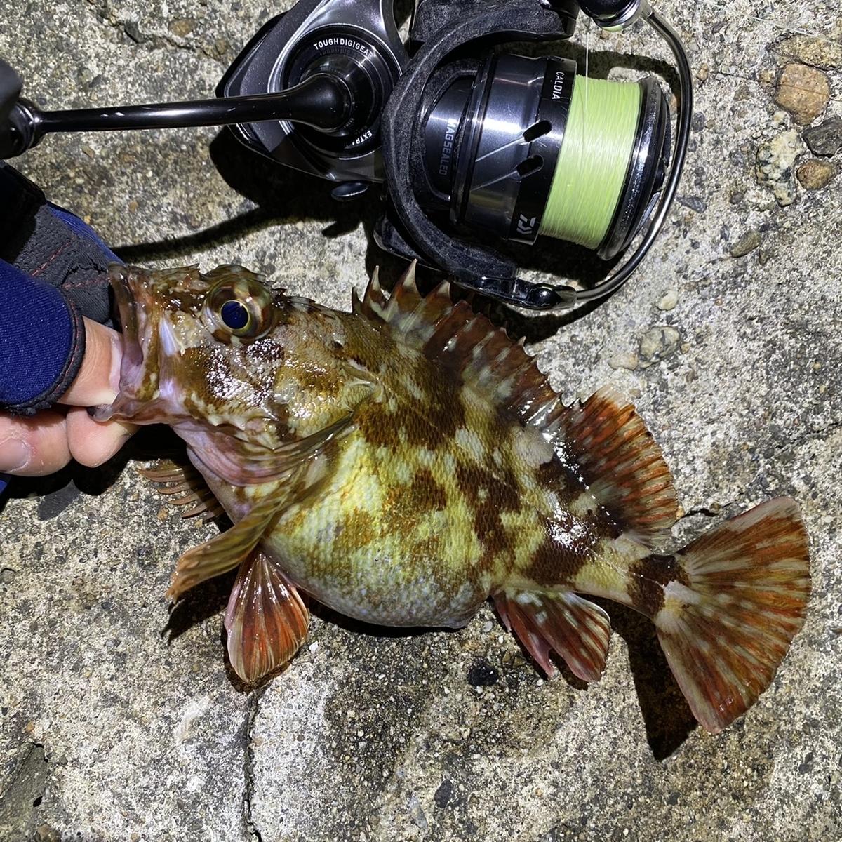 f:id:yu-kin-fishing:20210425111635j:plain