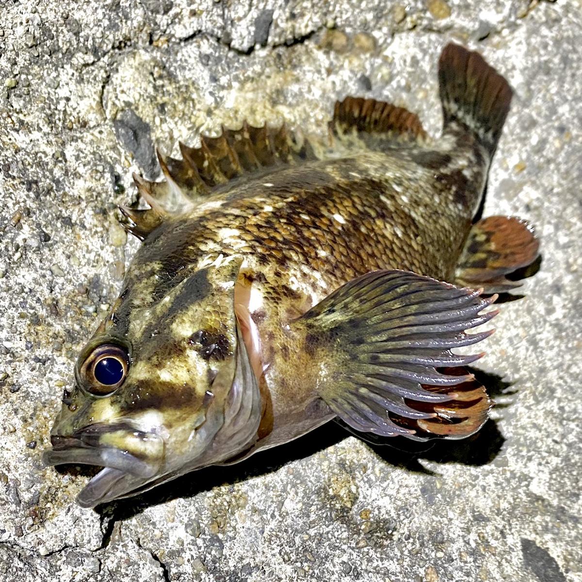 f:id:yu-kin-fishing:20210501144628j:plain