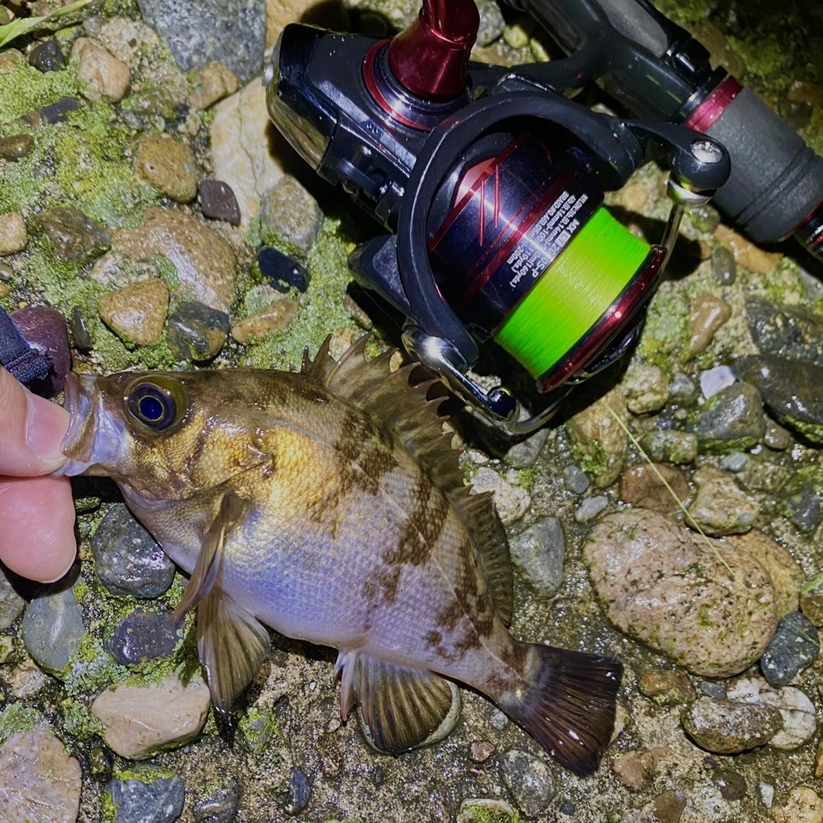 f:id:yu-kin-fishing:20210503121834j:plain
