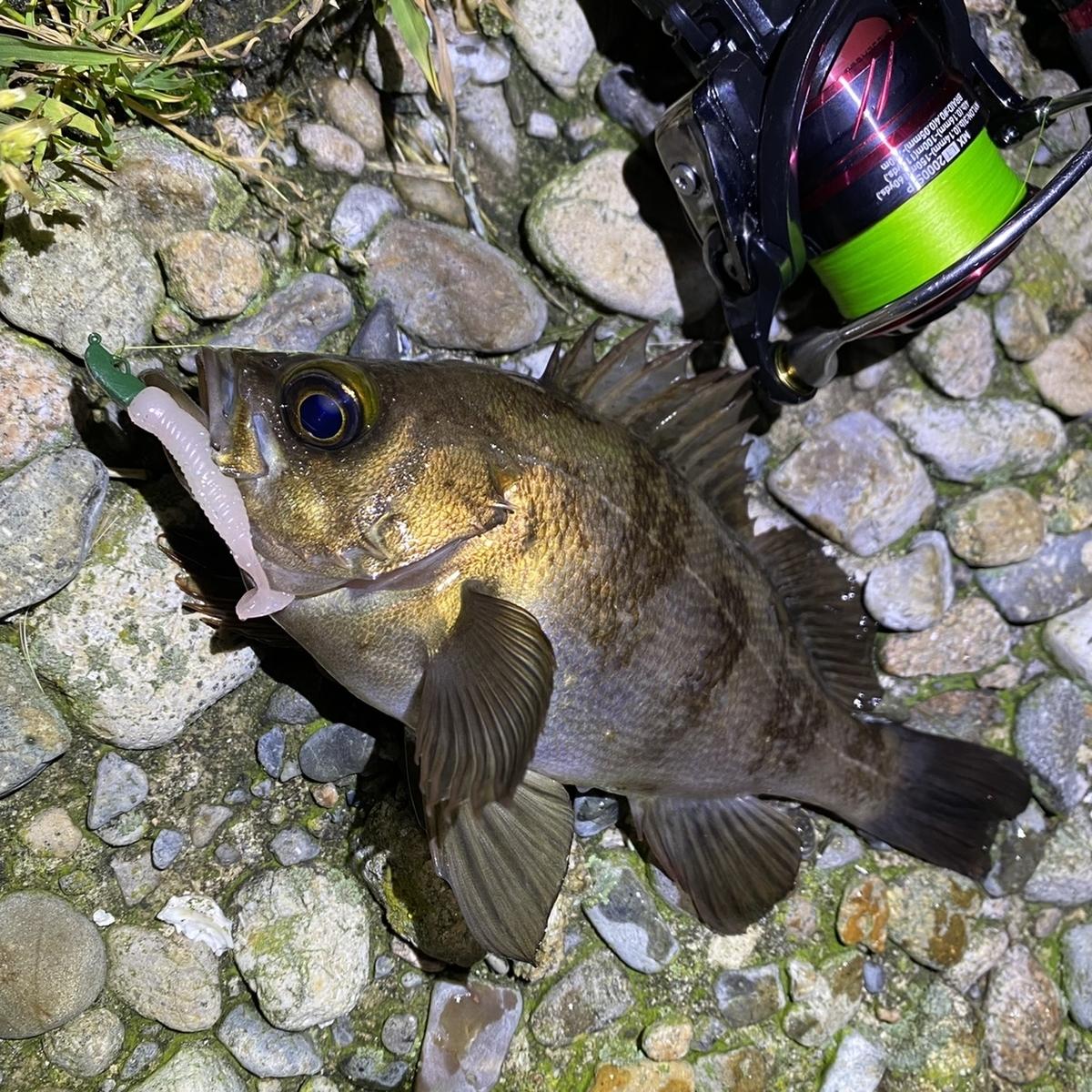 f:id:yu-kin-fishing:20210503121845j:plain