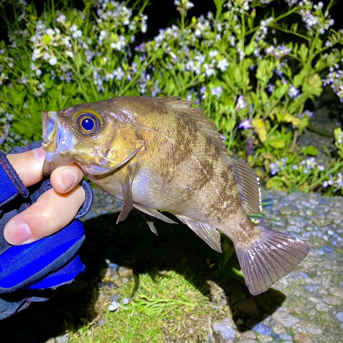 f:id:yu-kin-fishing:20210503121855j:plain