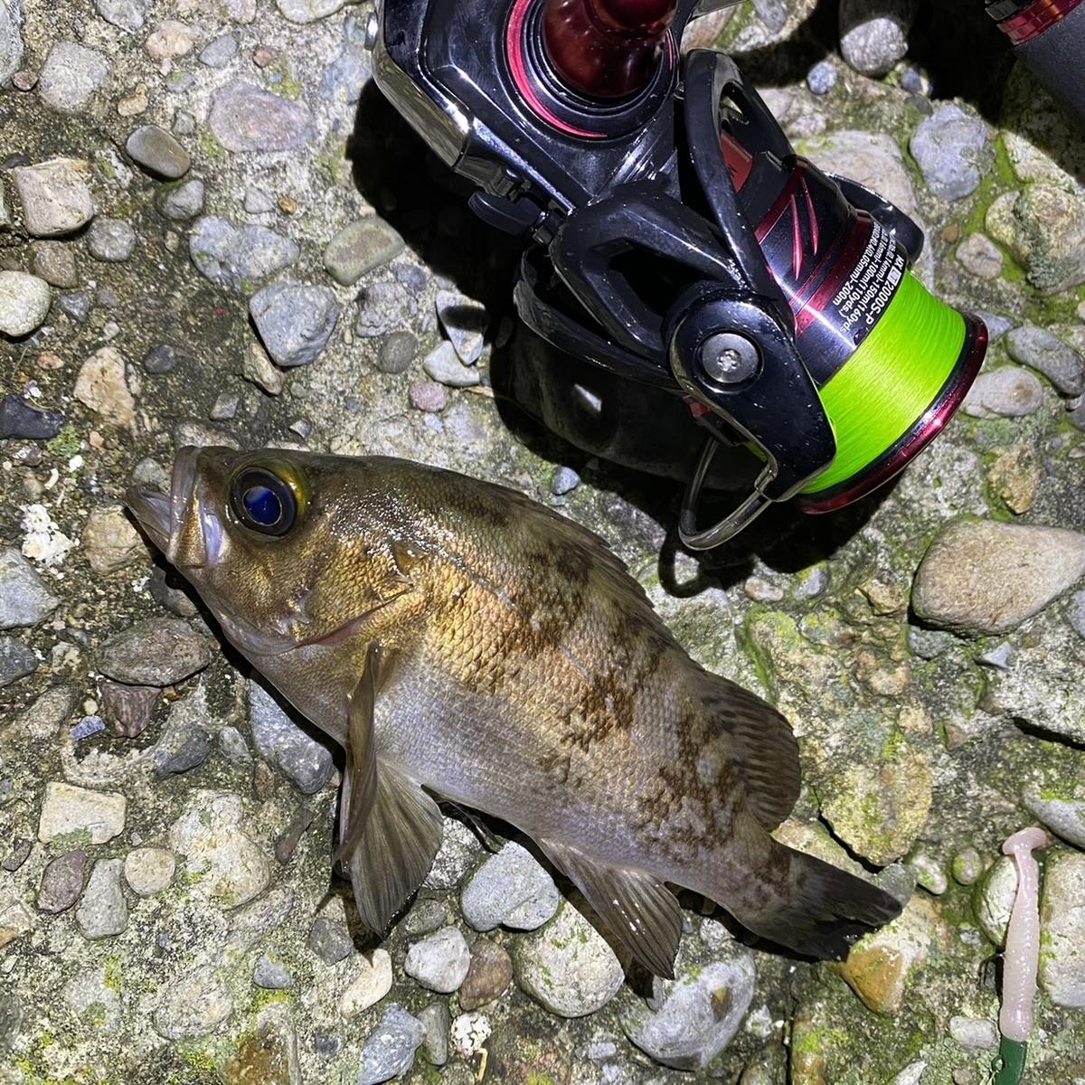 f:id:yu-kin-fishing:20210503121906j:plain