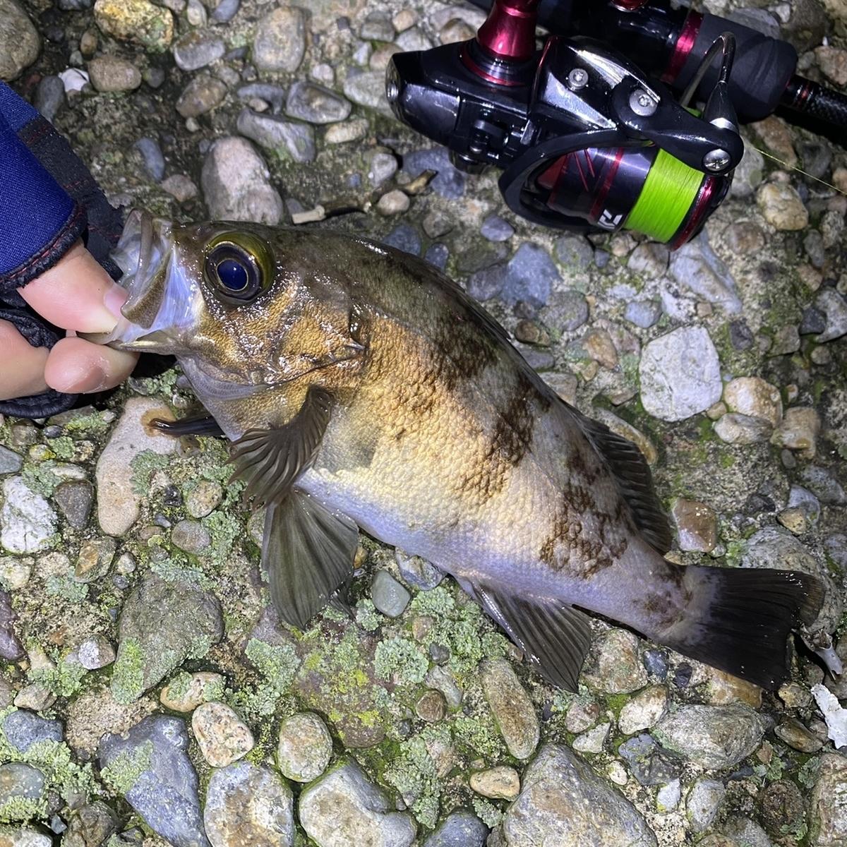 f:id:yu-kin-fishing:20210504145123j:plain