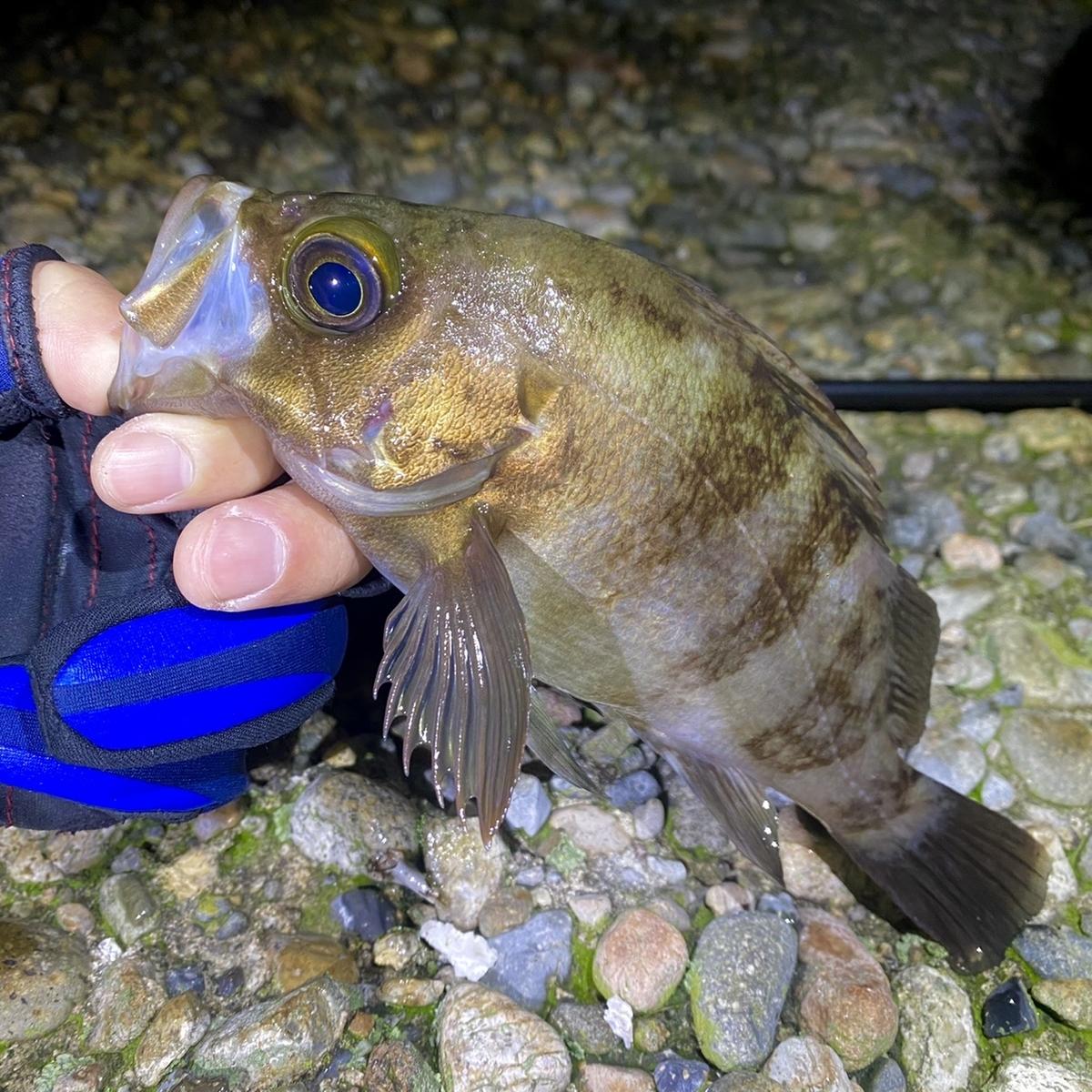 f:id:yu-kin-fishing:20210504145137j:plain