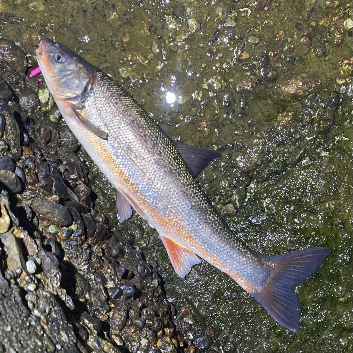 f:id:yu-kin-fishing:20210504145207j:plain