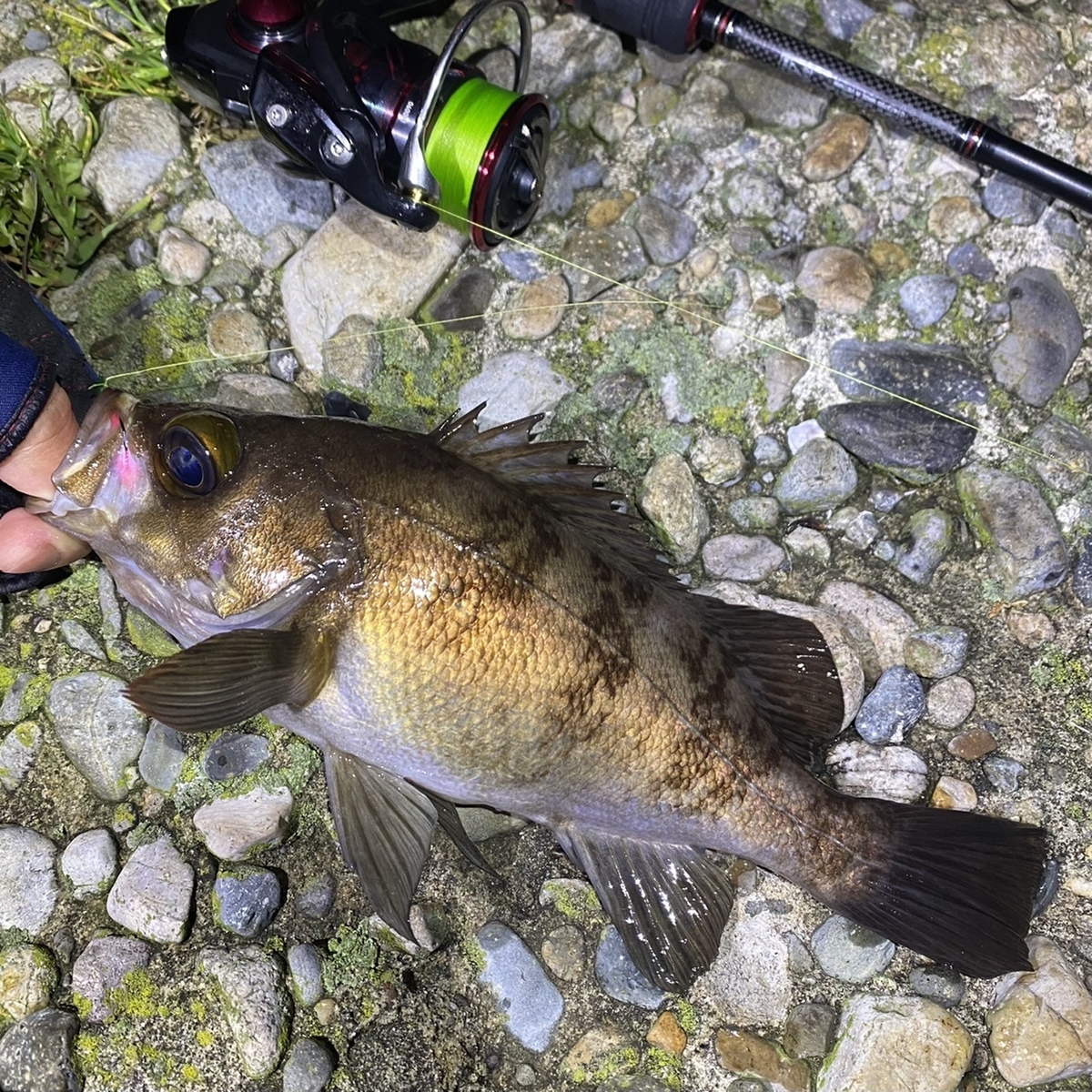 f:id:yu-kin-fishing:20210504145255j:plain
