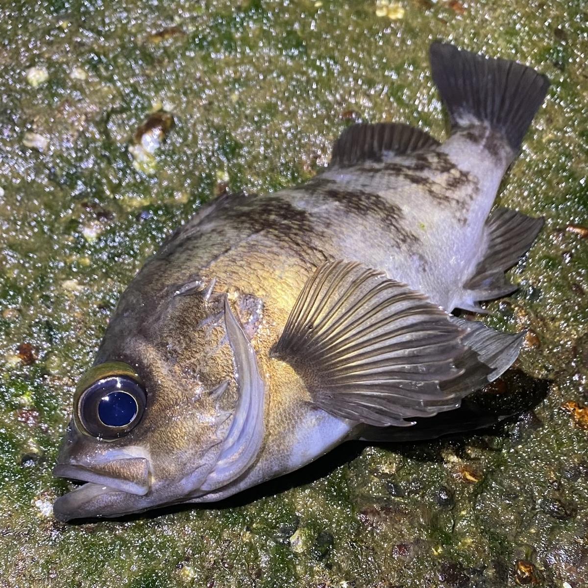 f:id:yu-kin-fishing:20210504145342j:plain