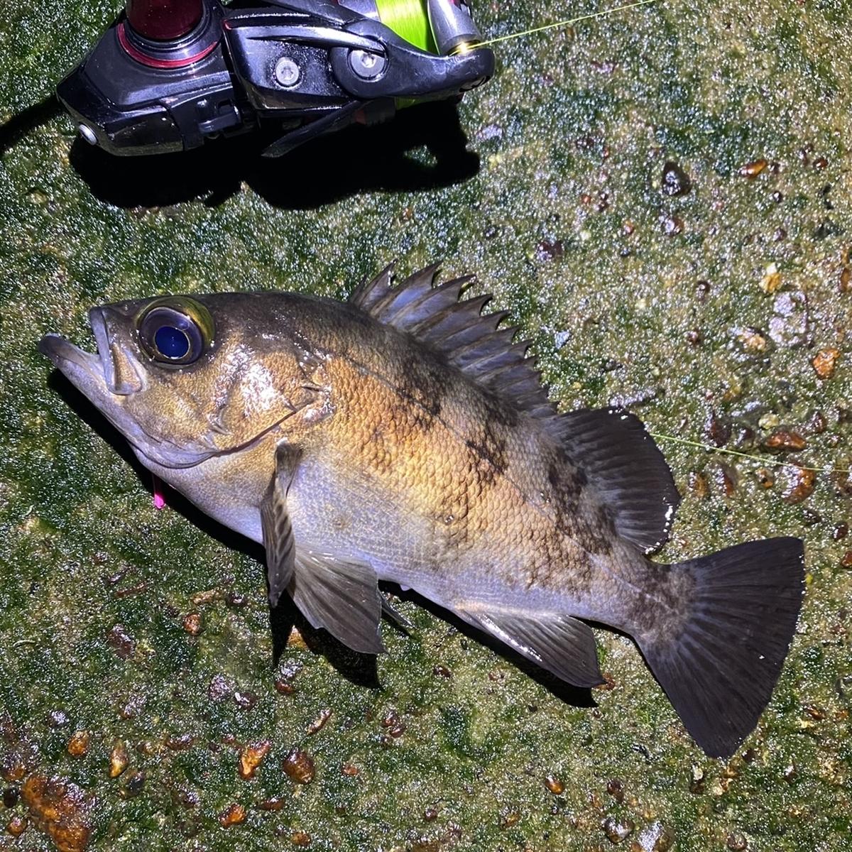 f:id:yu-kin-fishing:20210506190722j:plain