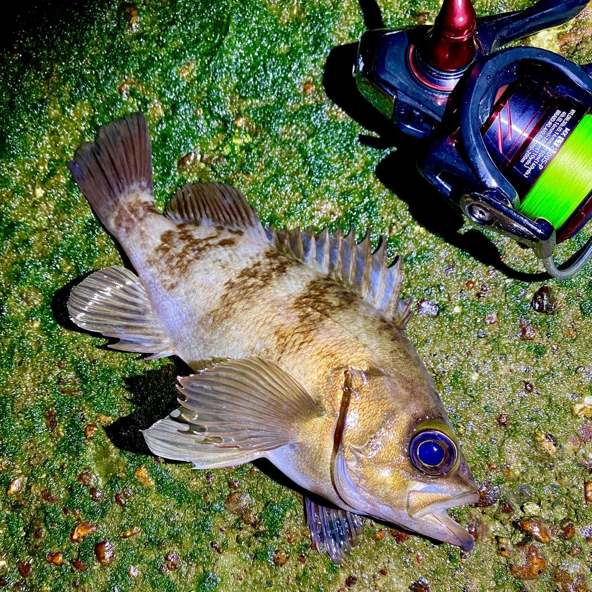 f:id:yu-kin-fishing:20210506190841j:plain