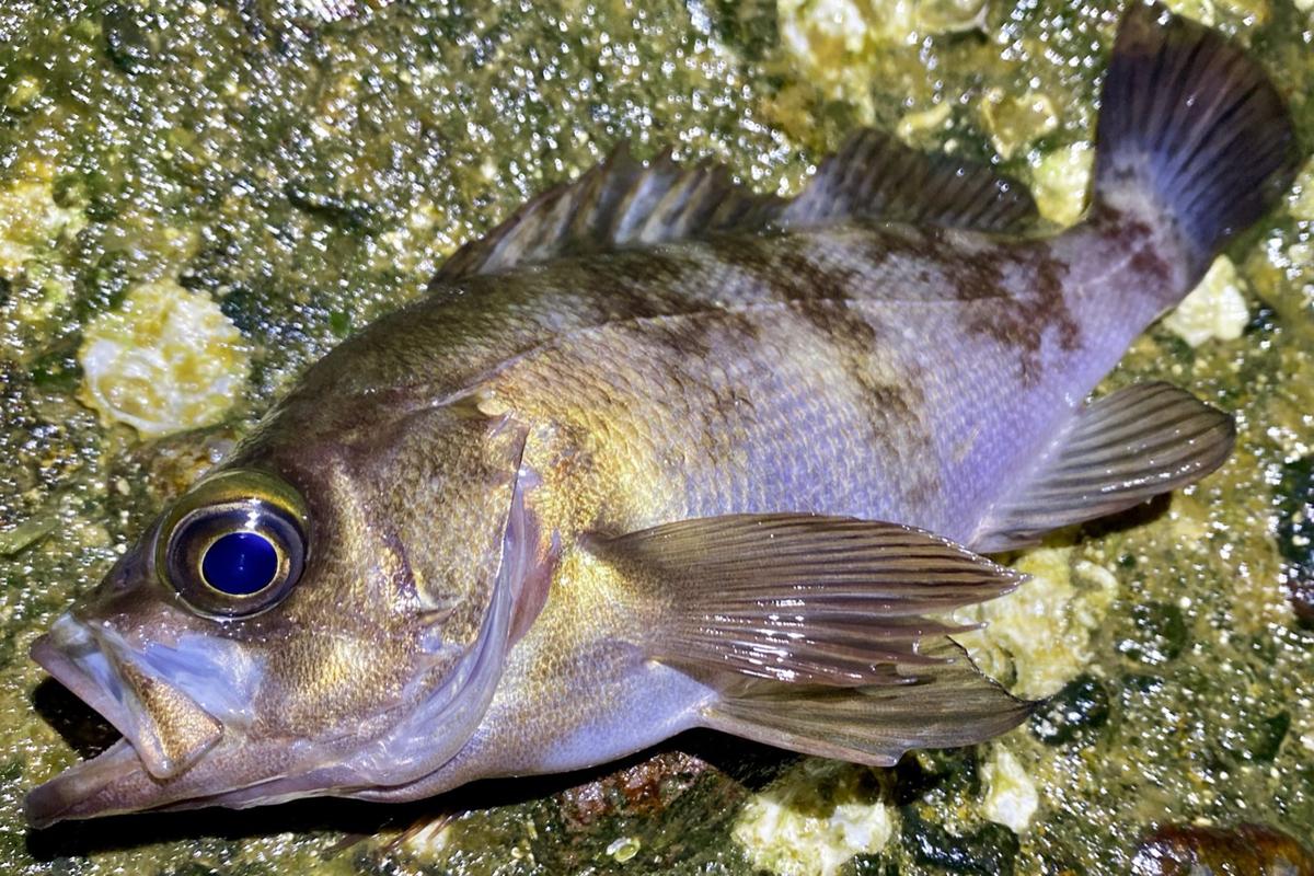 f:id:yu-kin-fishing:20210506190856j:plain