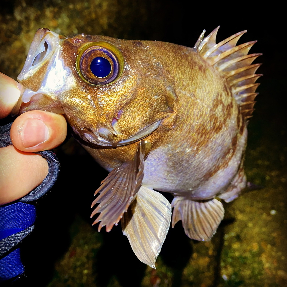 f:id:yu-kin-fishing:20210506203911j:plain