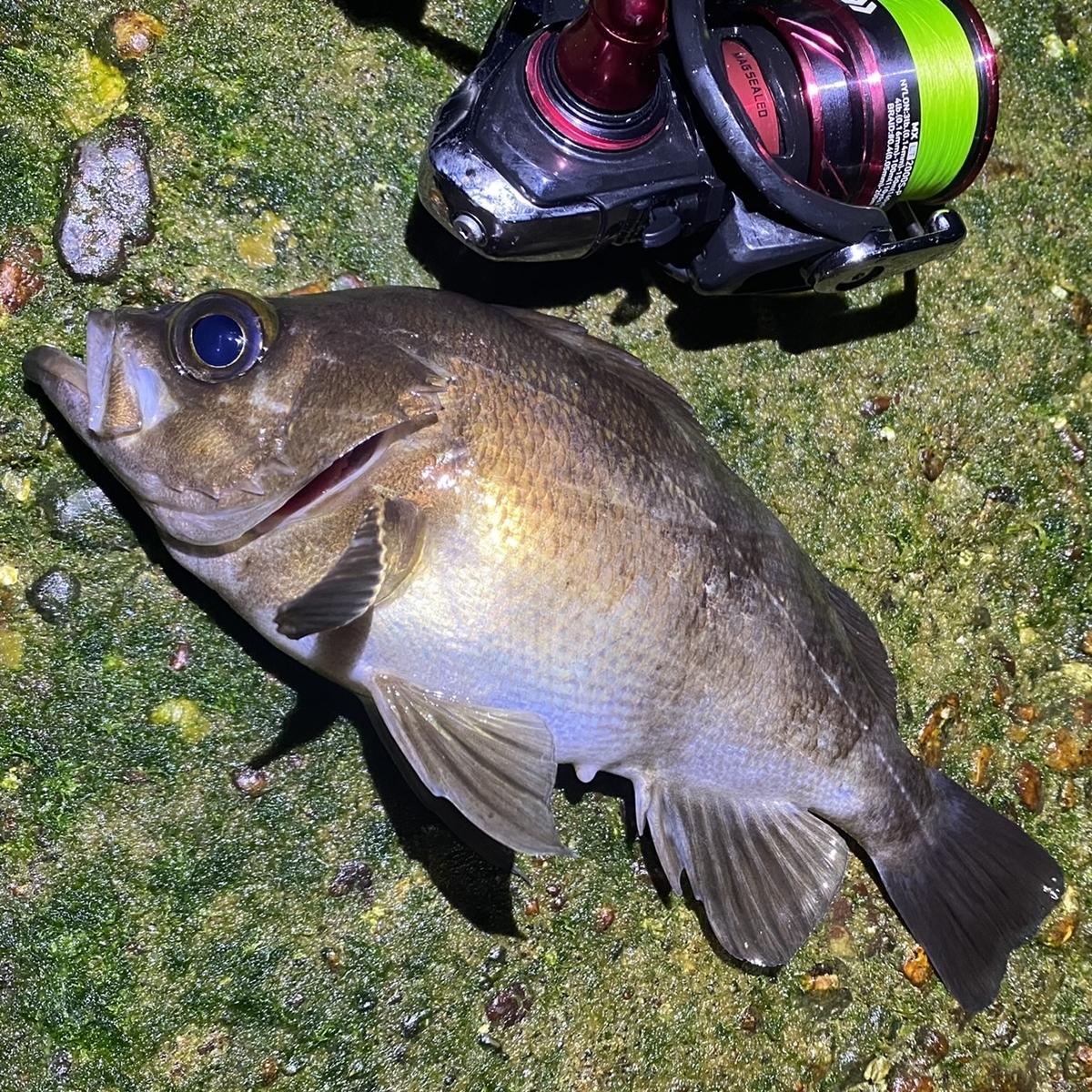 f:id:yu-kin-fishing:20210507101812j:plain
