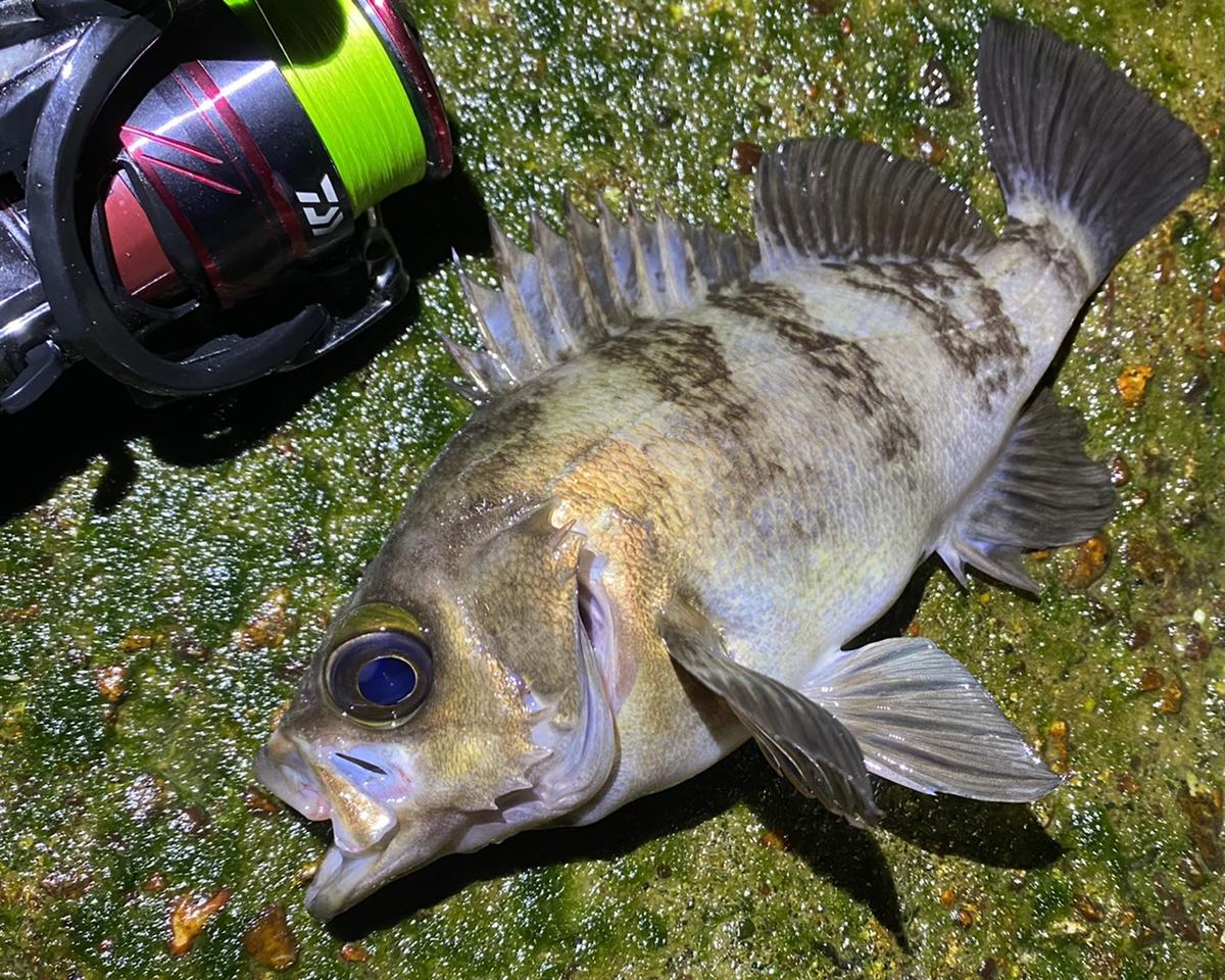 f:id:yu-kin-fishing:20210507101921j:plain