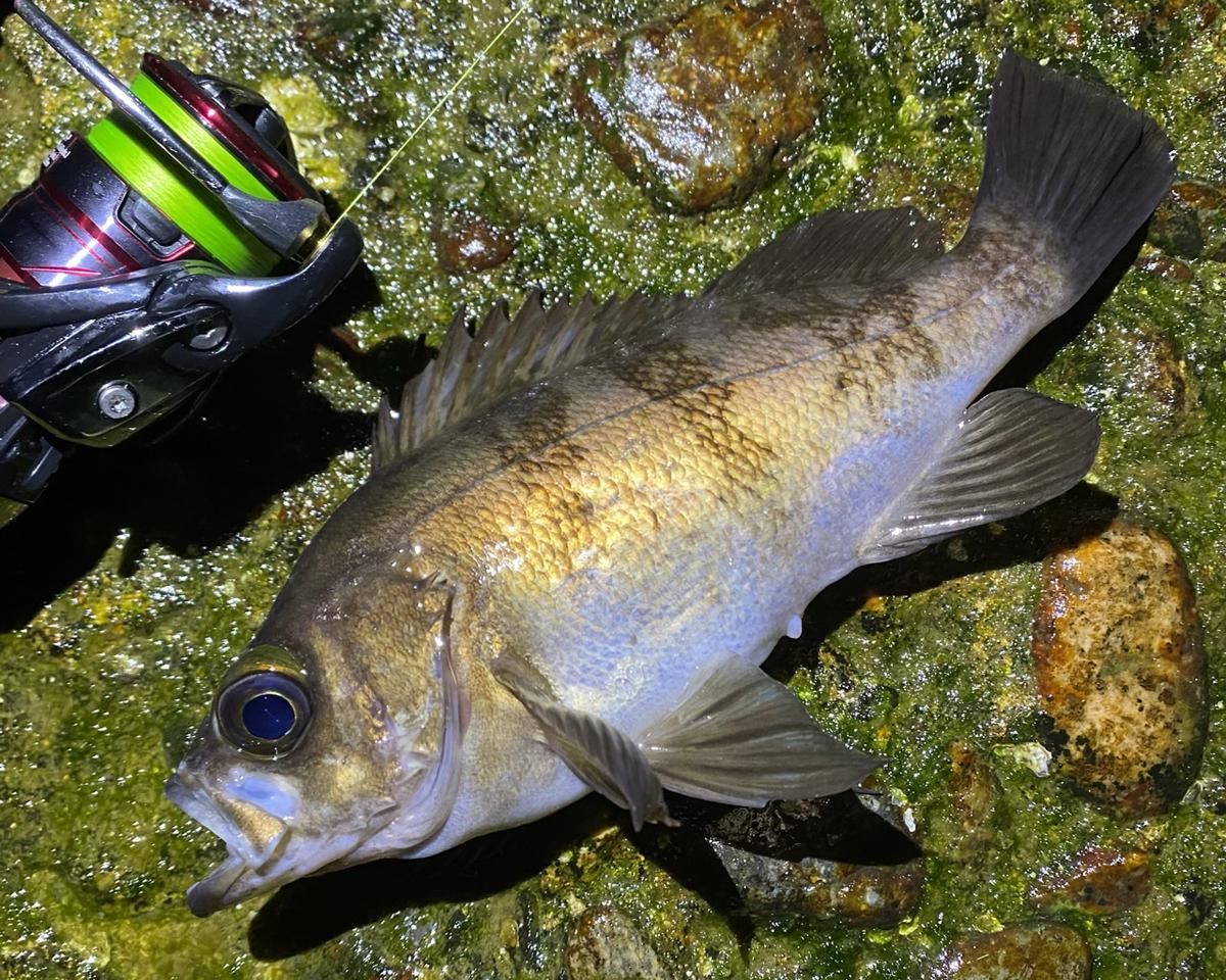f:id:yu-kin-fishing:20210507102011j:plain