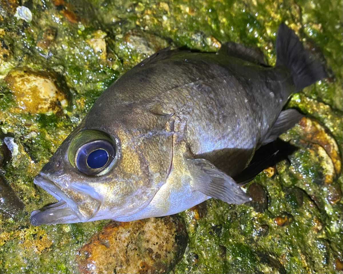 f:id:yu-kin-fishing:20210507102031j:plain