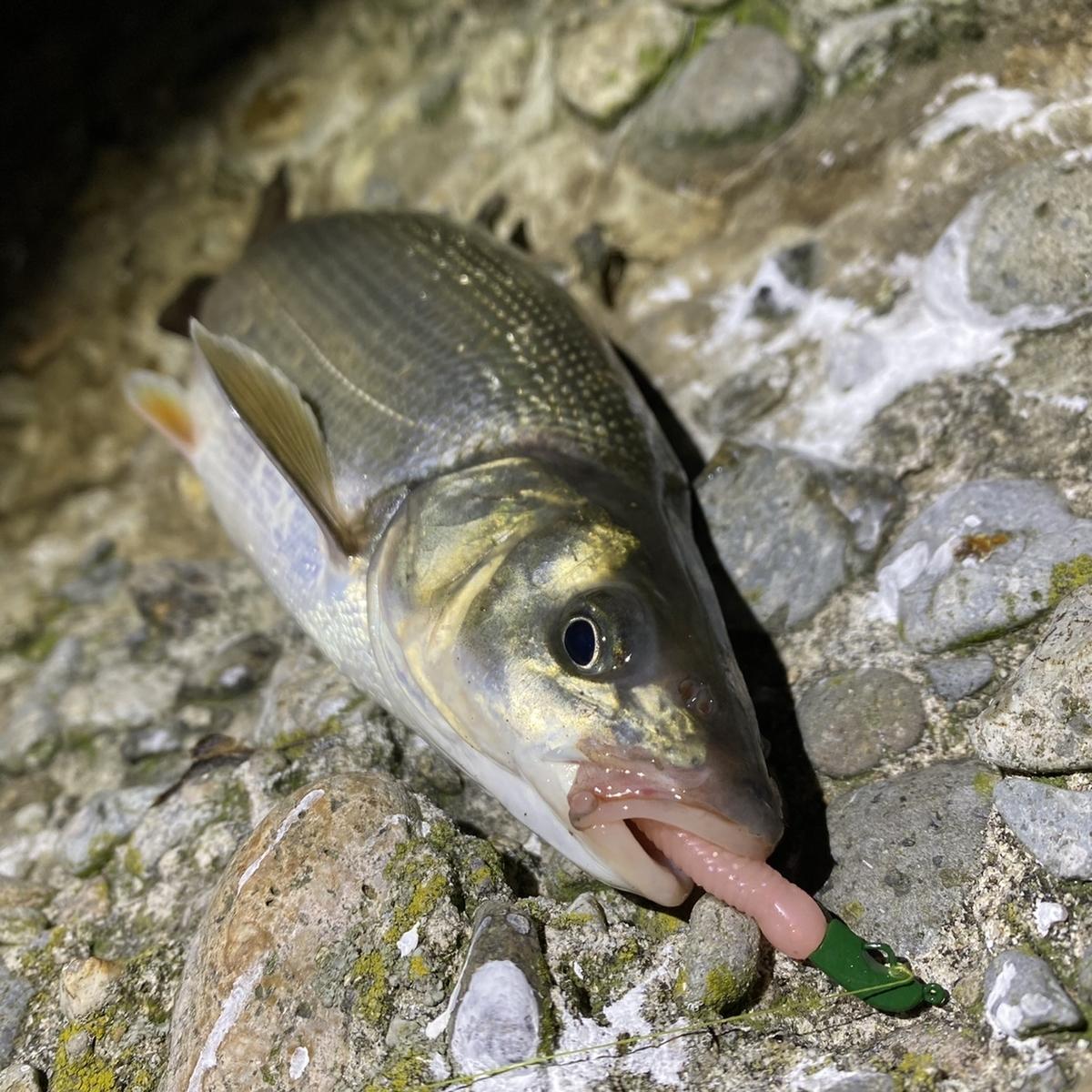 f:id:yu-kin-fishing:20210511125803j:plain