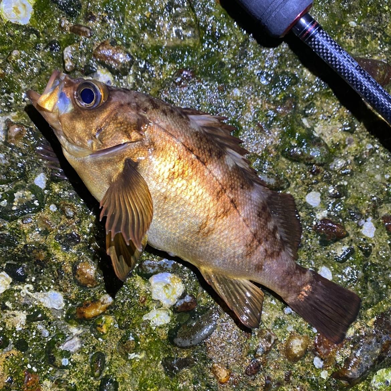 f:id:yu-kin-fishing:20210511125837j:plain