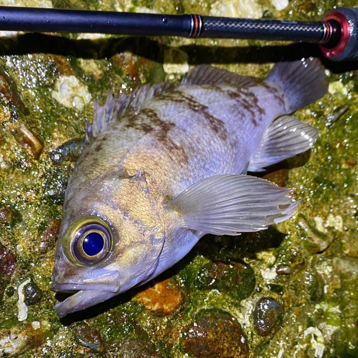 f:id:yu-kin-fishing:20210511125857j:plain