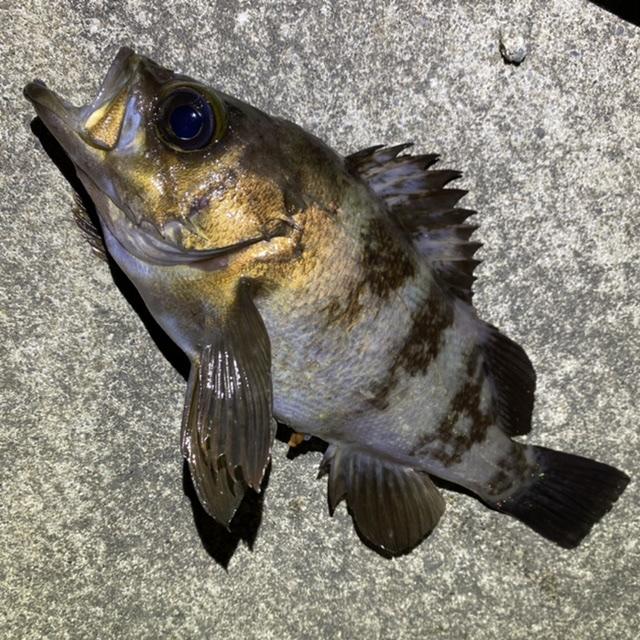 f:id:yu-kin-fishing:20210513124014j:plain