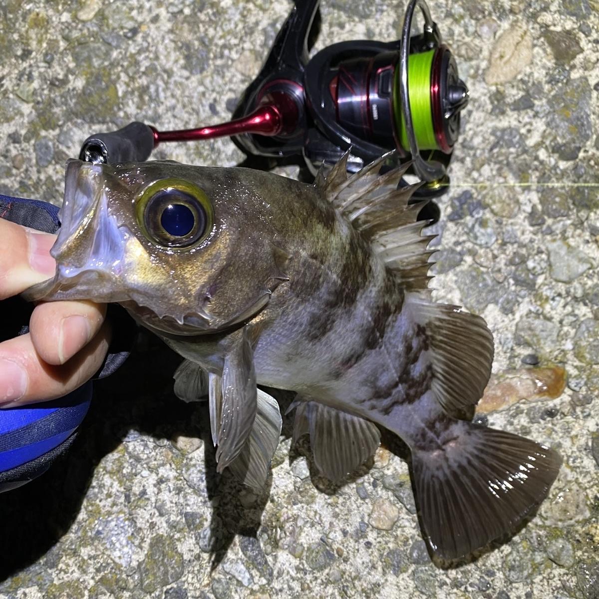 f:id:yu-kin-fishing:20210513124114j:plain
