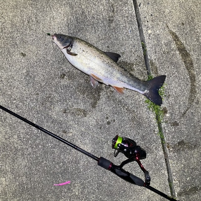 f:id:yu-kin-fishing:20210513124128j:plain