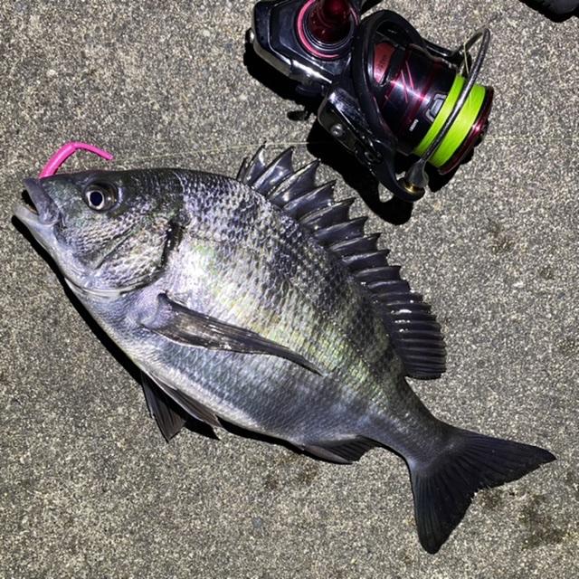f:id:yu-kin-fishing:20210515091010j:plain