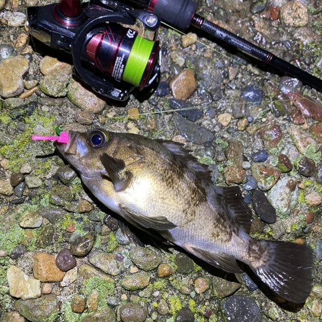 f:id:yu-kin-fishing:20210521111850j:plain