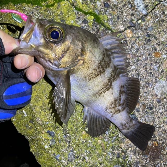 f:id:yu-kin-fishing:20210521111948j:plain