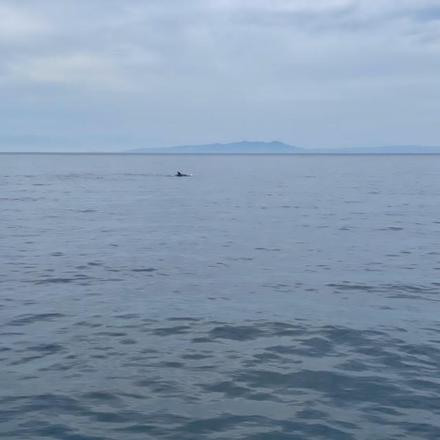 f:id:yu-kin-fishing:20210613113331j:plain