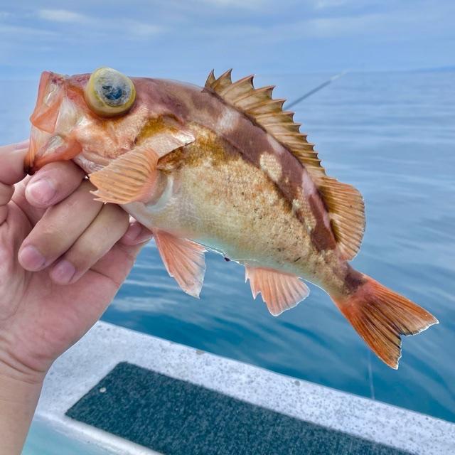 f:id:yu-kin-fishing:20210613113402j:plain