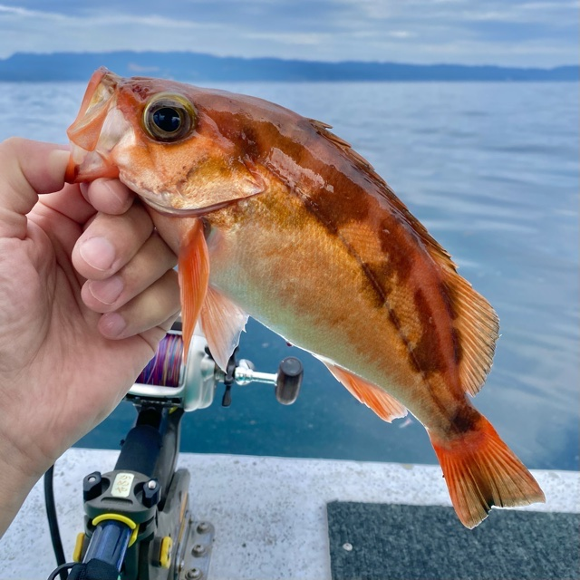 f:id:yu-kin-fishing:20210613113410j:plain