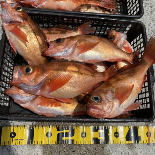 f:id:yu-kin-fishing:20210613113449j:plain