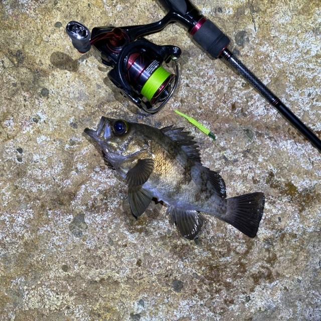 f:id:yu-kin-fishing:20210615195443j:plain