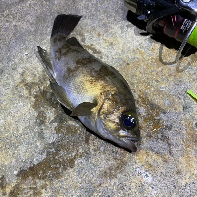 f:id:yu-kin-fishing:20210615195516j:plain