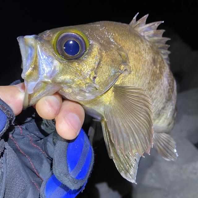 f:id:yu-kin-fishing:20210619172010j:plain