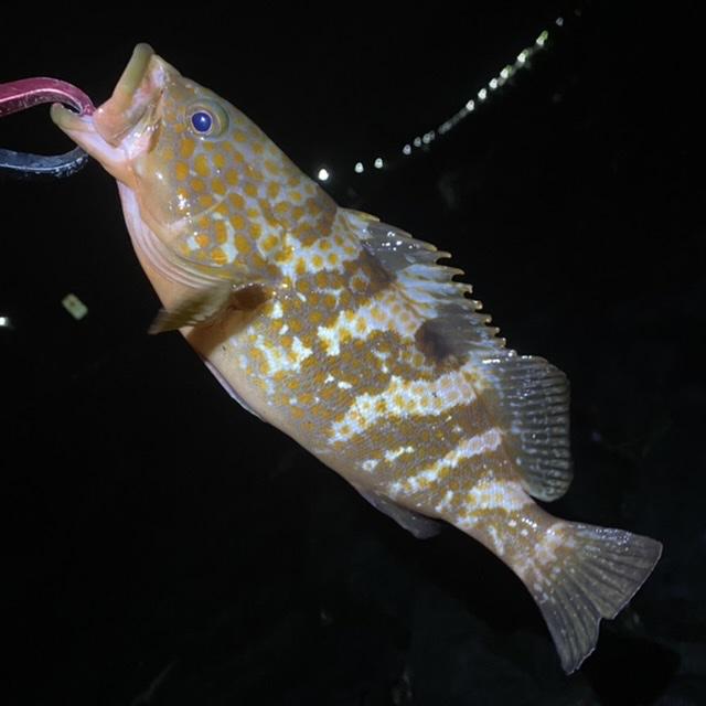 f:id:yu-kin-fishing:20210710095227j:plain