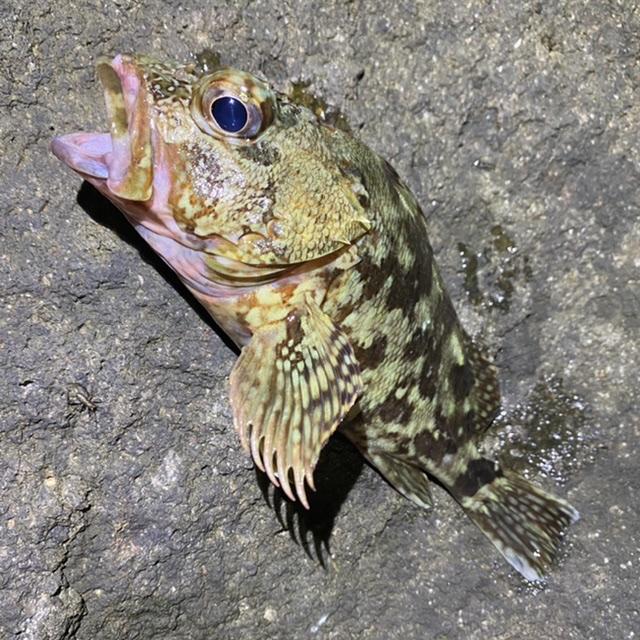 f:id:yu-kin-fishing:20210805091305j:plain